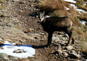tatra mountains animals