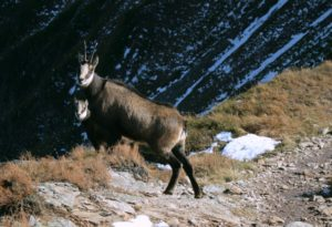 tatras animals